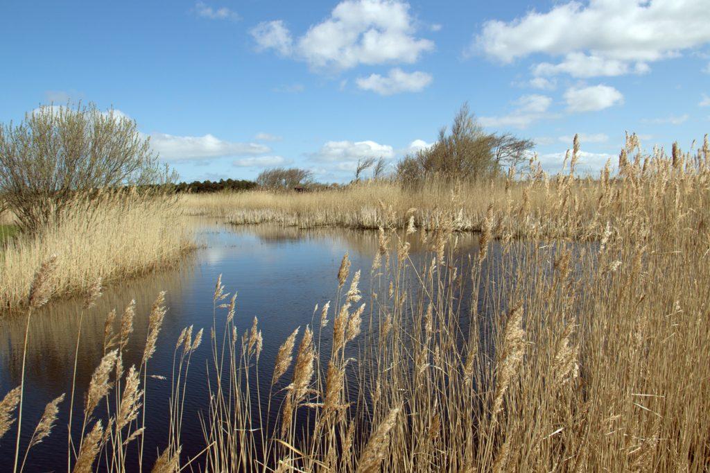Waterlandschap16 1024x682 - Landschap